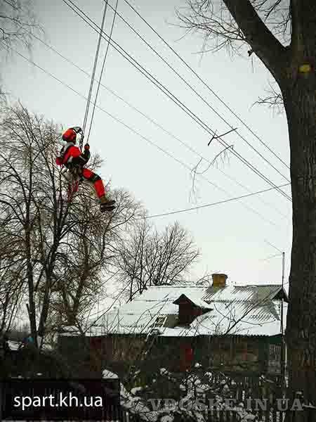 Спил аварийных деревьев в Харькове (3)