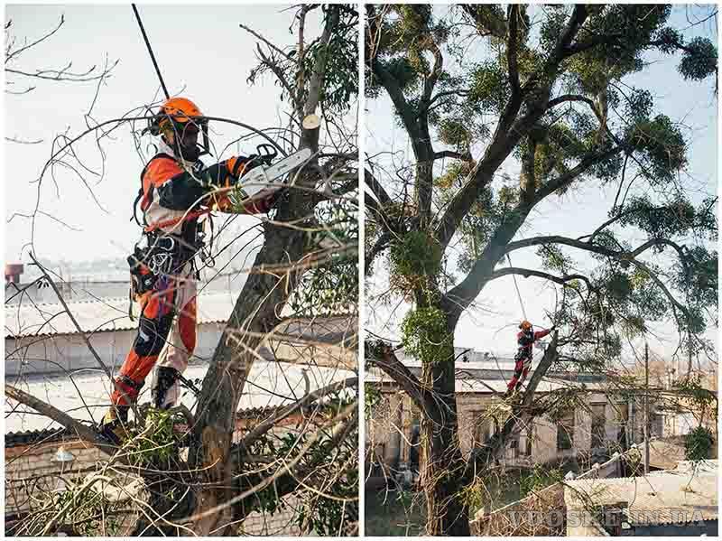 Обрезка деревьев в Харькове (4)