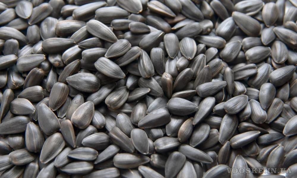 Завод по переработке сои может купить сою и другие масличные культуры оптом и в розницу (2)