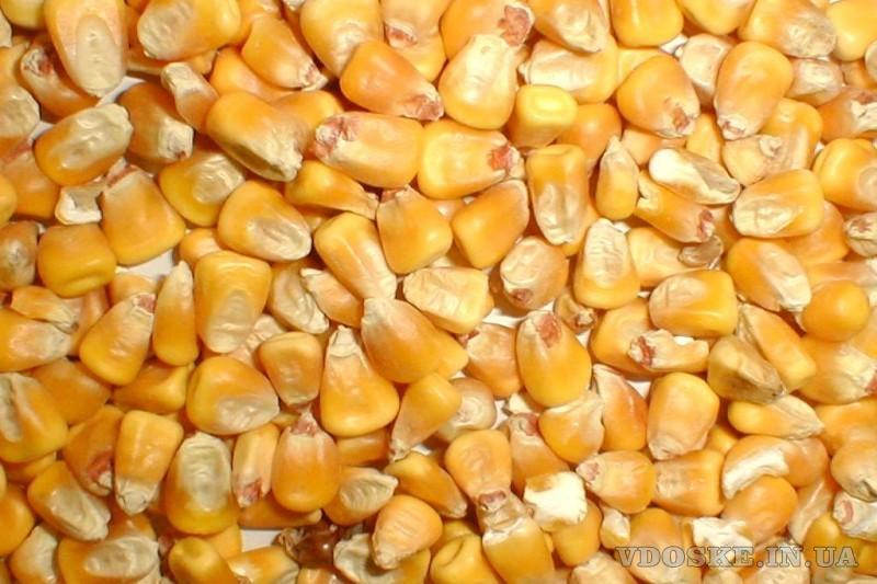 Завод по переработке сои может купить сою и другие масличные культуры оптом и в розницу (3)