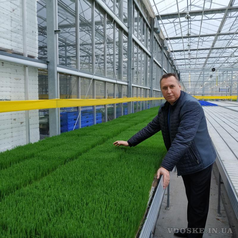 Продам Витграсс - сок из ростков пшеницы для вашего здоровья (2)