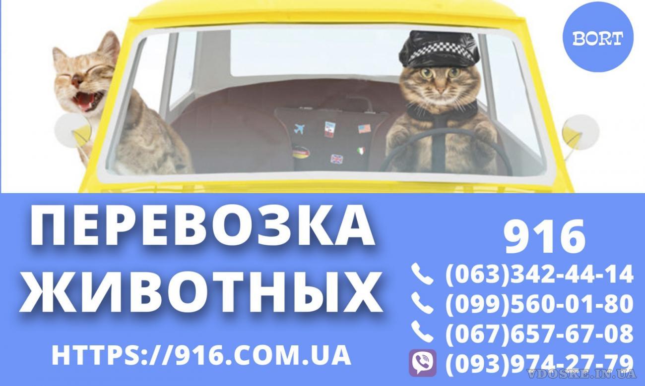 Срочно нужны водители такси со своим авто! Высокие тарифы! Низкий % ! (2)