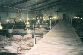 Строительство свинарников в Украине.