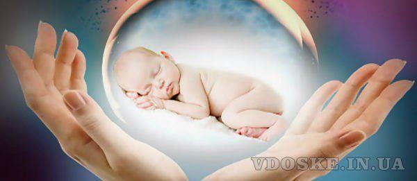 Работа донора яйцеклеток