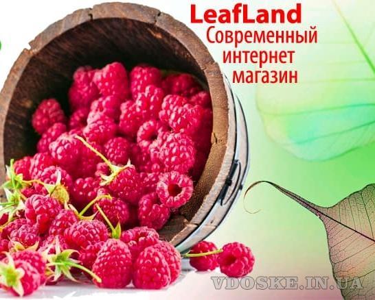 Купить саженцы почтой от магазина Leafland