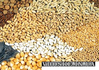 Продам Зерновые | Закупить Зерно Украина