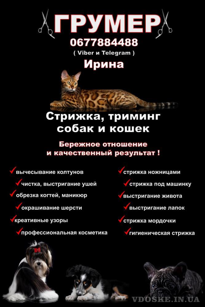 Грумер Харьков - Песочин , Стрижка собак и кошек