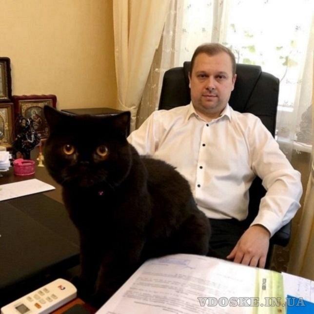 Услуги адвоката, юриста Киев.