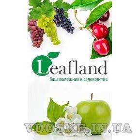 Интернет-магазин Leafland - предлагаем саженцы высокого качества по доступным ценам