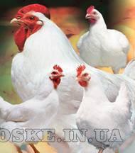 Добавки в корма для с/х животных, птиц, рыб