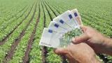 Шрот подсолнечный, мука, зерновые закупить в Украине